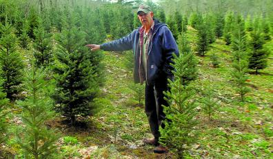 Larry Moss, owner of Moss Christmas Tree Farms, shows off the first post-recession crop of Fraser firs. which were planted four years ago and currently stand about five-feet high.