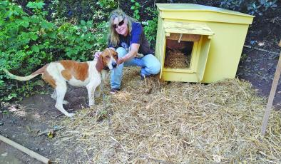 Habitat for Hounds builds houses for dogs in need.