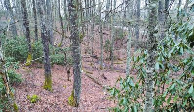 The Highlands-Cashiers Land Trust recently conserved 28 acres near the intersection of US 64 and Sherwood Forest Road.