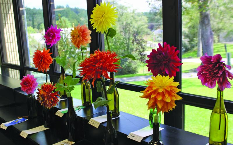 Planning for the 2020 Highlands Historical Society Dahlia Festival is underway.